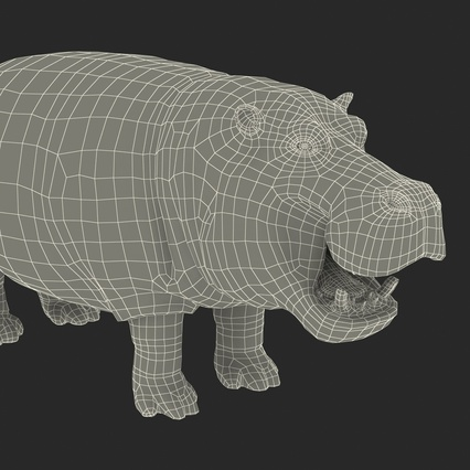 Hippopotamus Rigged for Cinema 4D. Render 37