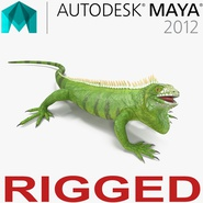 Green Iguana Rigged for Maya