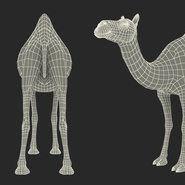Camel Rigged for Cinema 4D. Preview 34