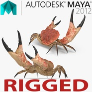 Tasmanian Giant Crab Rigged for Maya