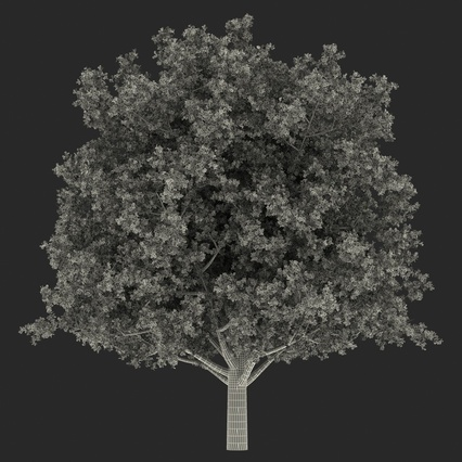 White Oak Tree Summer. Render 22