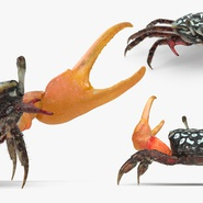 Fiddler Crab Fighting Pose with Fur. Preview 7