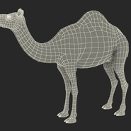 Camel Rigged for Cinema 4D. Preview 31