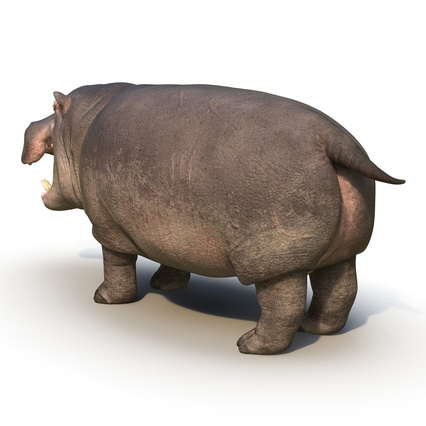 Hippopotamus Rigged for Cinema 4D. Render 7