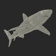 Dusky Shark Rigged for Maya. Preview 29