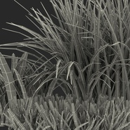 Grass Collection. Preview 24