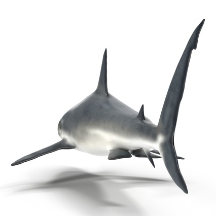 Caribbean Reef Shark. Render 21