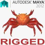 Red Rock Crab Rigged for Maya