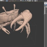 Fiddler Crab Standing Pose with Fur. Preview 19