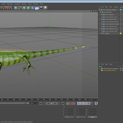 Green Iguana Rigged for Cinema 4D. Render 24