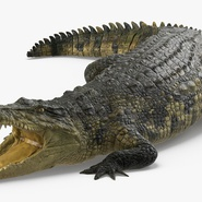 Crocodile Rigged for Maya. Preview 5