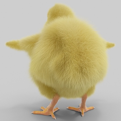Chick with Fur. Render 7
