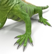 Green Iguana Rigged for Cinema 4D. Preview 23