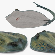 Stingray Rigged Collection. Preview 28