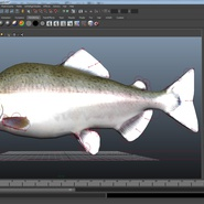 Pink Salmon Rigged for Maya. Preview 18