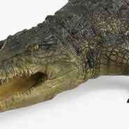 Crocodile Rigged for Maya. Preview 14