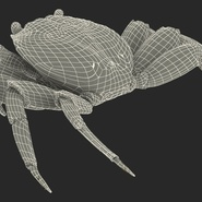 Red Rock Crab Rigged for Maya. Preview 31