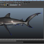 Dusky Shark Rigged for Maya. Preview 25