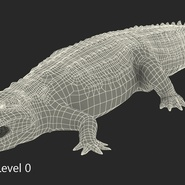 Crocodile Rigged for Maya. Preview 23