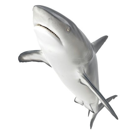 Caribbean Reef Shark. Render 18