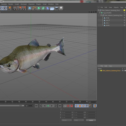 Pink Salmon Swiming Pose. Render 19