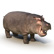 Hippopotamus Rigged for Cinema 4D. Preview 5