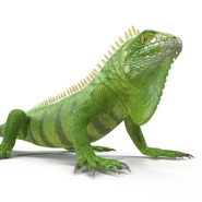 Green Iguana Rigged for Cinema 4D. Preview 21