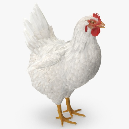 White Chicken. Render 10