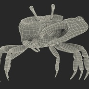 Fiddler Crab Standing Pose with Fur. Preview 4