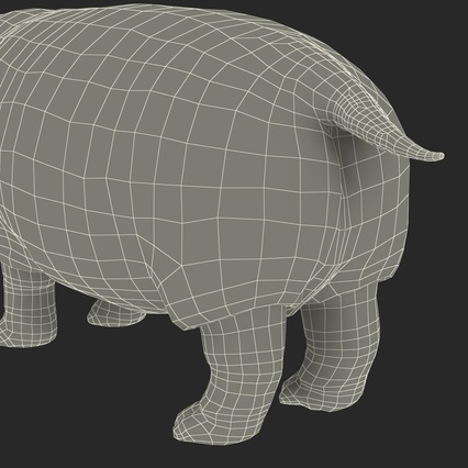 Hippopotamus Rigged for Cinema 4D. Render 36