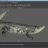 Crocodile Rigged for Maya. Preview 22