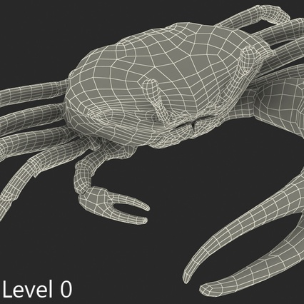 Fiddler Crab with Fur. Render 17