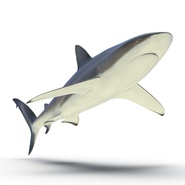 Dusky Shark Rigged for Maya. Preview 9