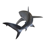 Dusky Shark Rigged for Maya. Preview 20