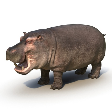 Hippopotamus Rigged for Cinema 4D. Render 6