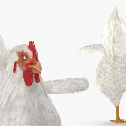 White Chicken. Render 8