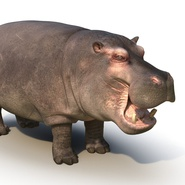 Hippopotamus Rigged for Cinema 4D. Preview 19