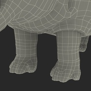 Hippopotamus Rigged for Cinema 4D. Preview 39