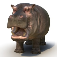 Hippopotamus Rigged for Cinema 4D. Preview 11