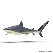 Dusky Shark Rigged for Maya. Preview 3