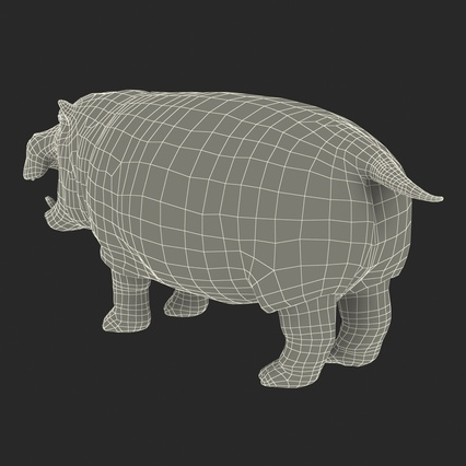 Hippopotamus Rigged for Cinema 4D. Render 31