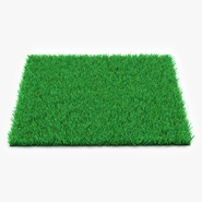 Kentucky Bluegrass Grass
