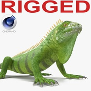 Green Iguana Rigged for Cinema 4D. Preview 1