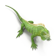 Green Iguana Rigged for Cinema 4D. Preview 14