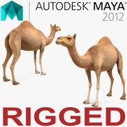 Camel Rigged for Maya