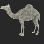 Camel Standing Pose. Preview 4