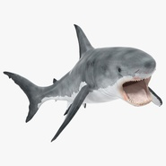 Great White Shark 2