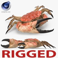 Tasmanian Giant Crab Rigged for Cinema 4D