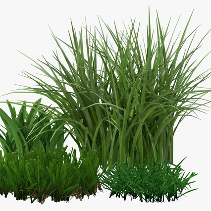 Grass Collection. Render 10