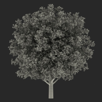 White Oak Tree Summer. Render 4